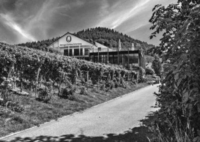 Weingut Schloss Ortenberg | Ortenberg