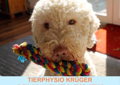 Tierphysio Krüger | Offenburg